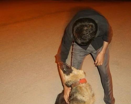 Ben ve köpeğim