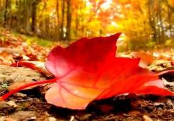 Bir şairin kaleminden dökülen yapraklar, mevsimlerden sonbahar…