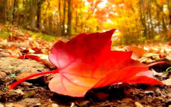 Bir şairin kaleminden dökülen yapraklar